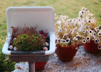 Bepflanzung mit Hauswurz